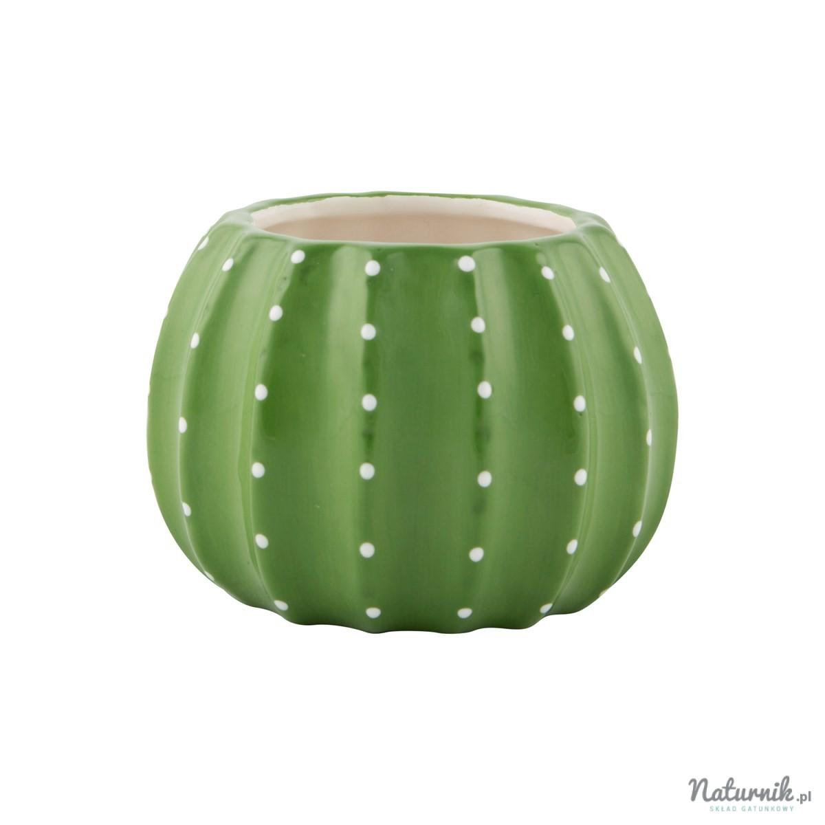 Doniczka Kaktus